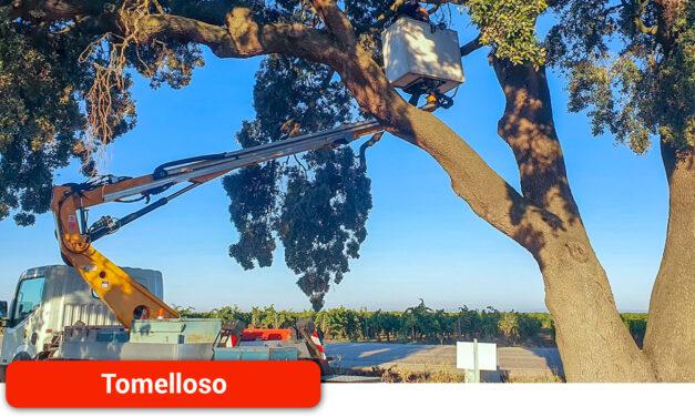"""El Ayuntamiento procede a sanear la """"carrasca de la sandalia"""" tras los daños sufridos en una de sus ramas principales"""