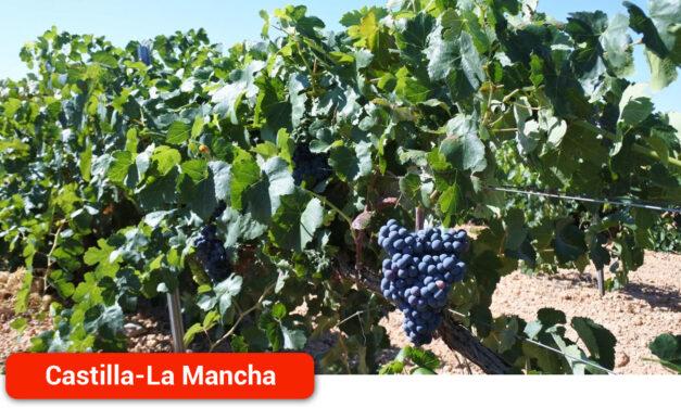 La región resuelve ayudas por casi 31 millones de euros para que los viticultores puedan mejorar la competitividad de sus viñedos