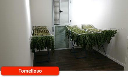 La Guardia Civil detiene a cuatro personas e incauta 31 kilos de marihuana en tres domicilios