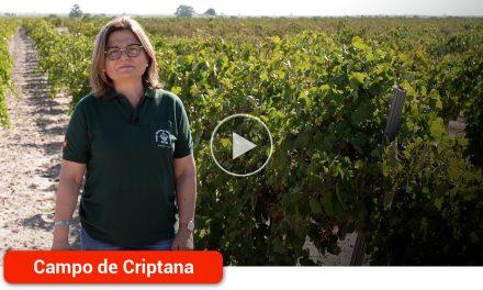 Vendimia mecanizada, la apuesta de 'Vinícola del Carmen' para conseguir el equilibrio entre rentabilidad, sostenibilidad y calidad de los vinos